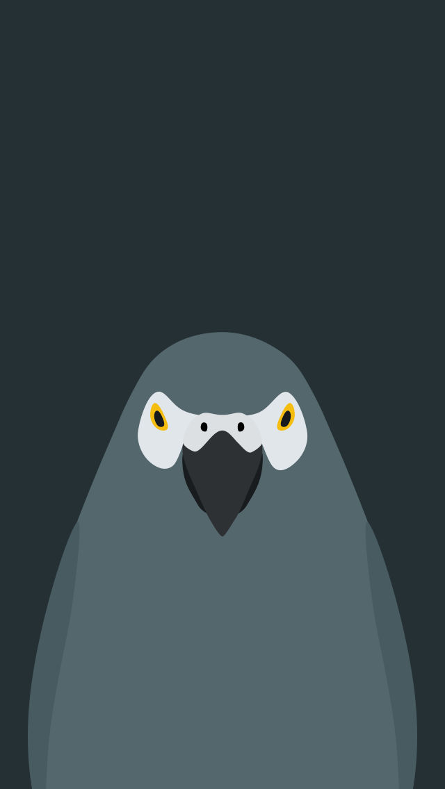 Grey Parrot - bird wallpaper for iPhone