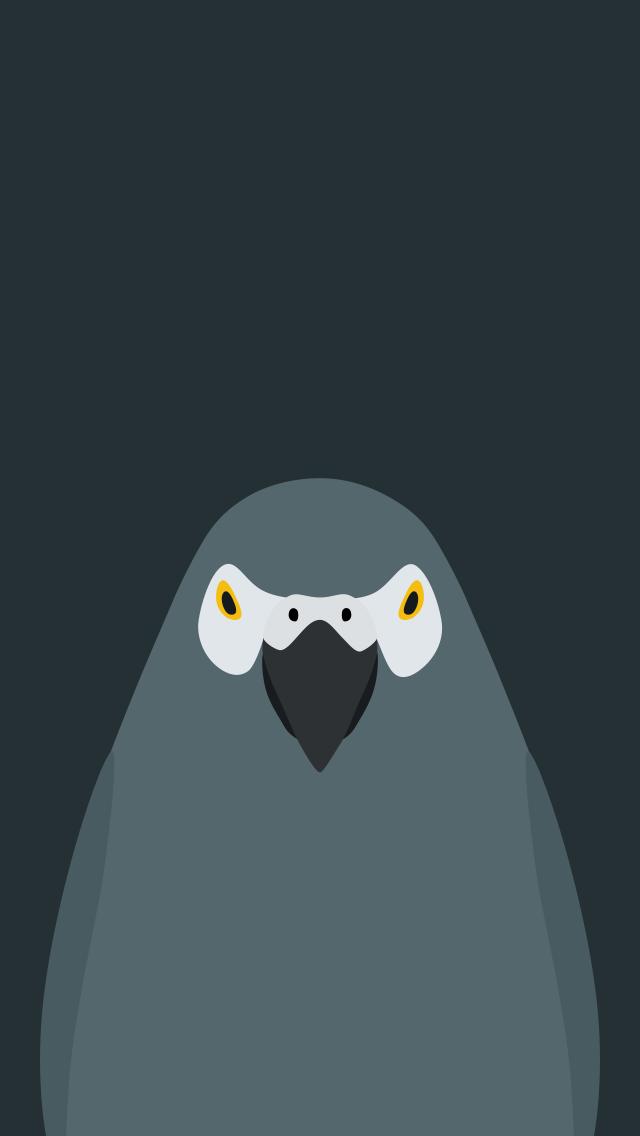 Grey Parrot - bird wallpaper for iPhone