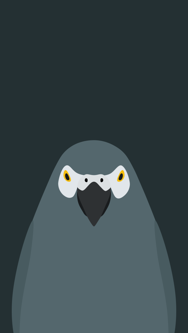 Grey Parrot - bird wallpaper for iPhone by birnimal