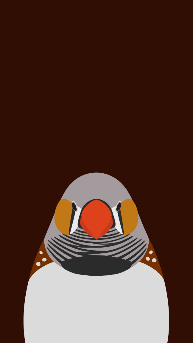 Zebra Finch  - bird wallpaper for iPhone