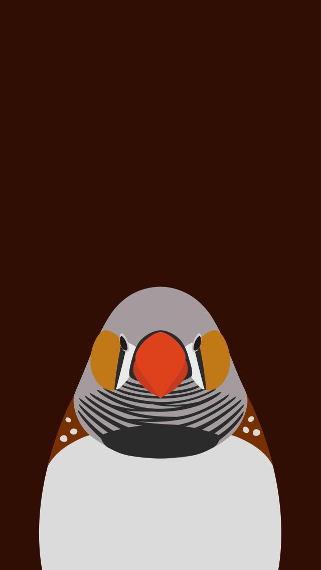 Zebra Finch  - bird wallpaper for iPhone by birnimal