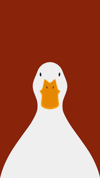 Domestic Duck  - bird wallpaper for iPhone