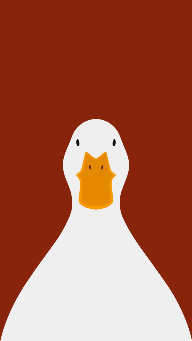 Domestic Duck  - bird wallpaper for iPhone by birnimal
