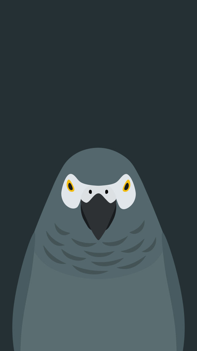 Grey Parrot v2 - bird wallpaper for iPhone