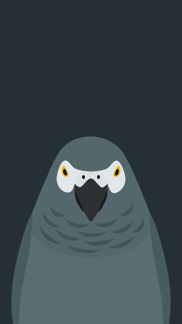 Grey Parrot v2 - bird wallpaper for iPhone by birnimal