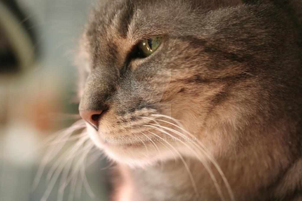 Calm Dry Cat Food