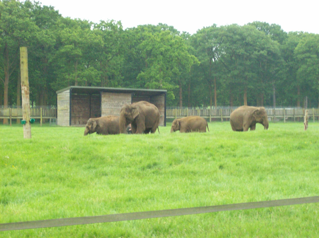 Woburn's Elephants by KingLeoLionheart