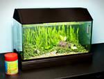 Aquarium render