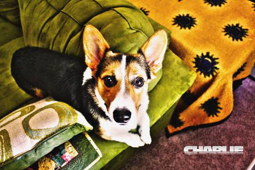 Charlie's Spot