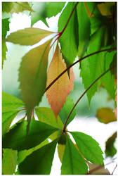 Foliage II by Fox82