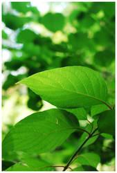 Foliage I by Fox82