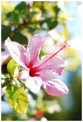 Bloom by Fox82
