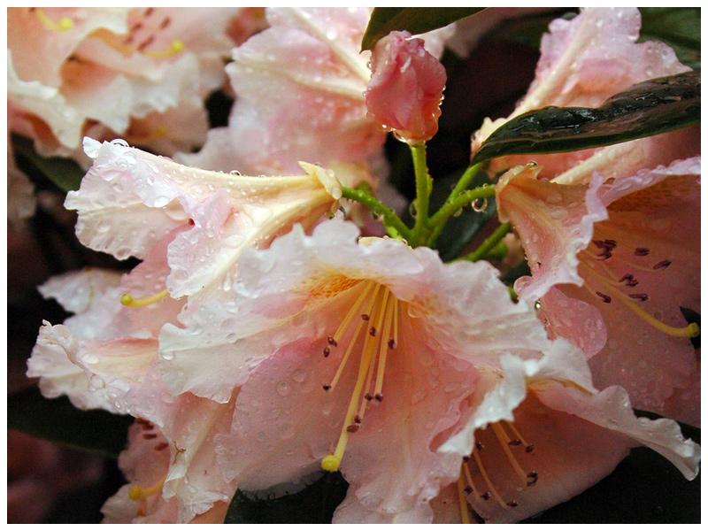 Wet Flowers by Fox82