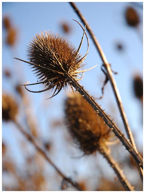 Undergrowth I by Fox82