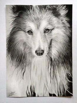 Dog- drawing