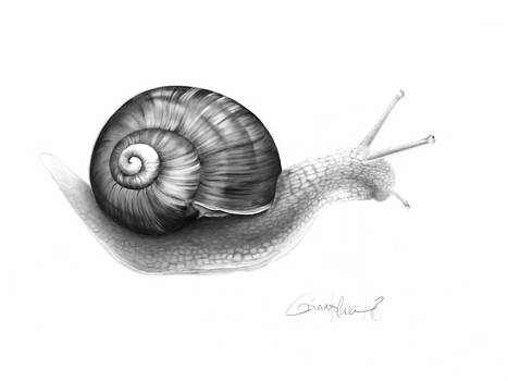 Snail - digital drawing