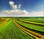 Spring fields by jup3nep
