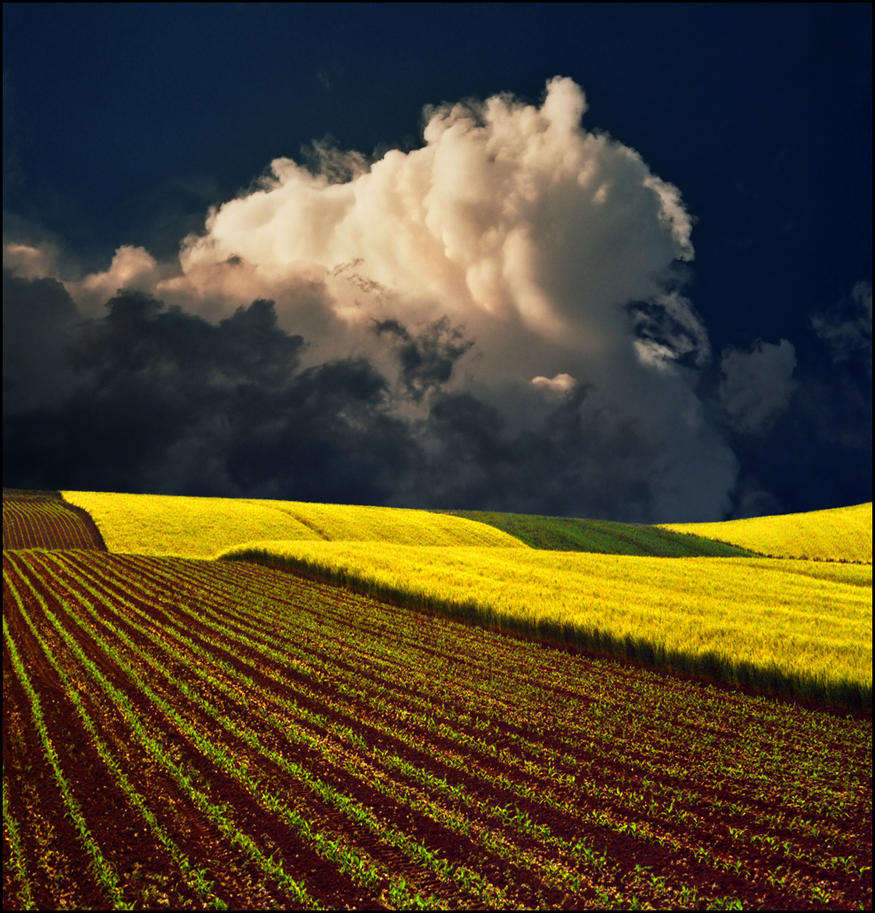 Yellow field by jup3nep