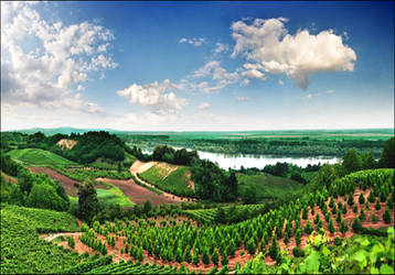 Vineyards by jup3nep