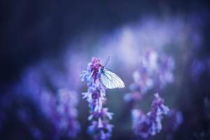 flower by Svetlyachochek