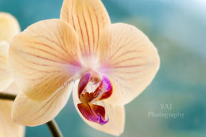 Beauty Glow by sheenajanes