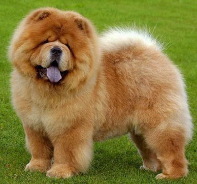 Adorable doggo  by 12doctors