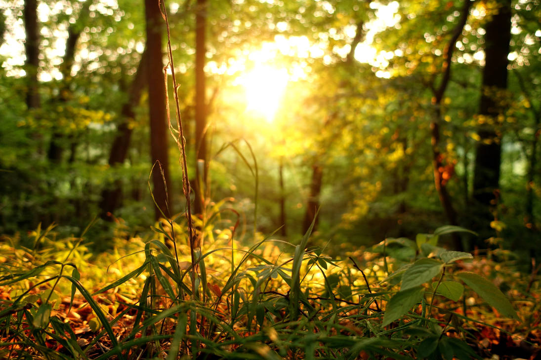 Forest full of sunshine by mik-photo