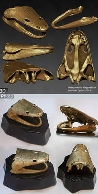 skull of Metoposaurus