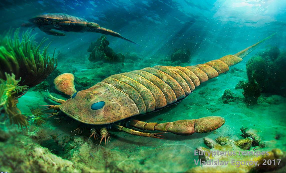 Eurypterus remipes by AnthodonKR
