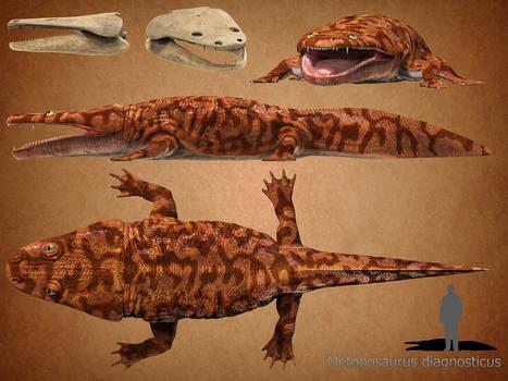 Metoposaurus diagnosticus