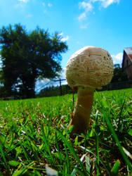 Megashroom 3553