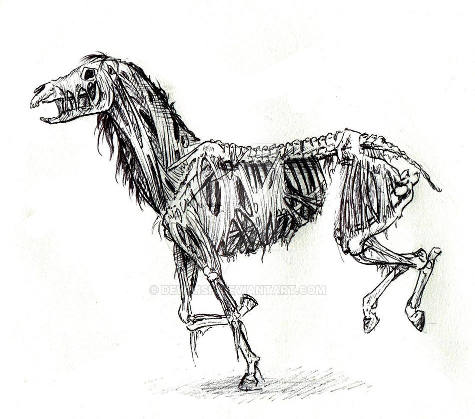 Zombie Horse sketch by Dewilish on DeviantArt