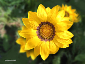 yellow flower garden-001 by SHAIRL