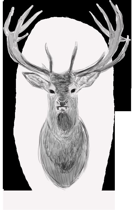 Deer by Awia-cz