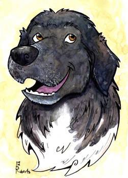 Pet - Head Sketch