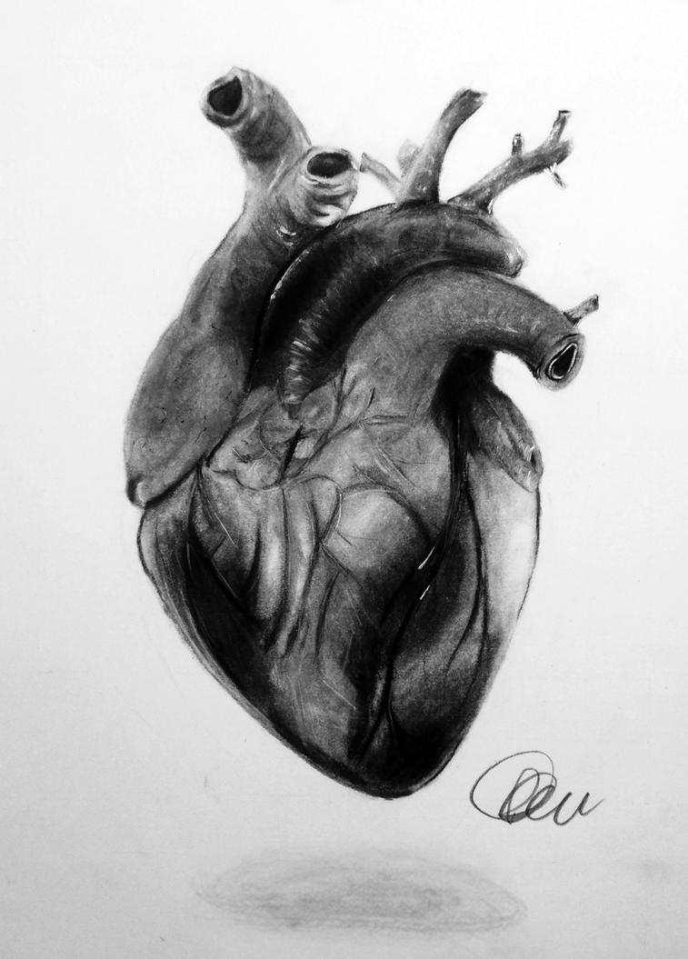 Anatomical Heart By Potionsmaster007 On Deviantart