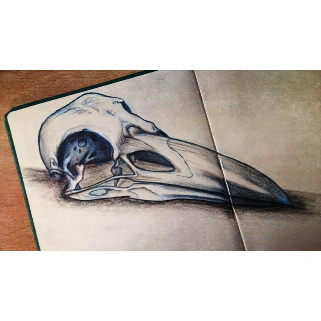 Crow Skull Study by TurrKoise