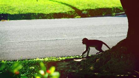 Monyet by sasyaaaaa