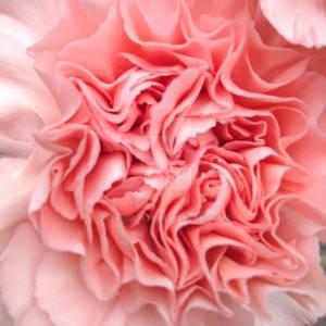Flower Folds