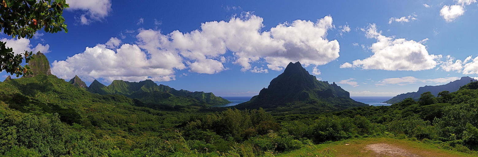 Tropical Paradise by Mashuto