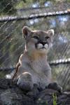 Puma Pose
