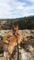 Rocky hike - leashed dog