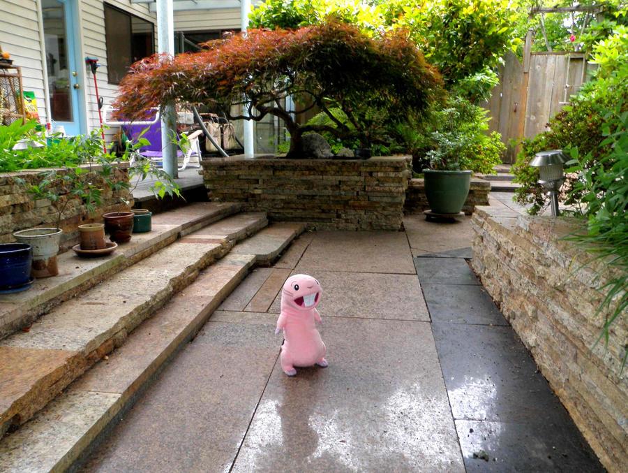 Rufus on My Garden Walk