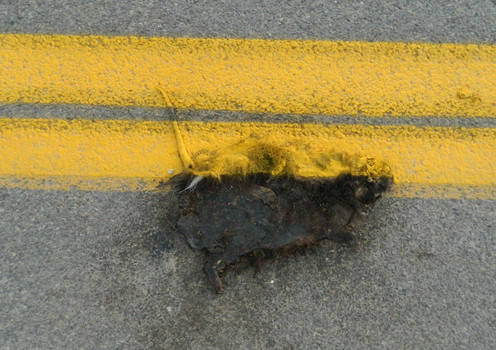 Dead Skunk with New Stripe