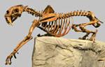 Smilodon  fatalis Skeleton Stock