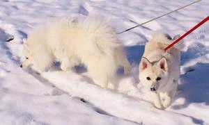 Hiroki and Akiko in the Snow