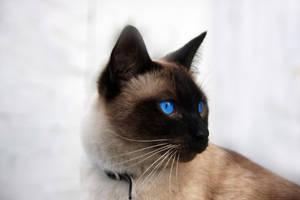Blue Eyes by Grayda