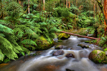 Toorongo Falls 3 by Grayda