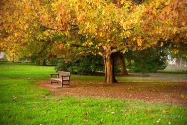 Mossvale Park by Grayda