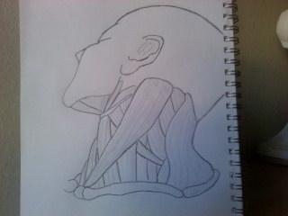 Neck muscles by akaitsu